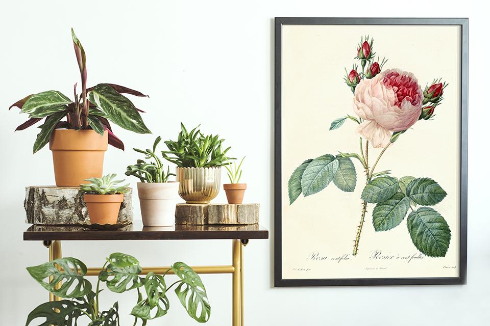 Poster botanique avec une rose